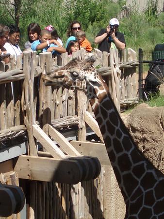 Dallas Zoo 2010