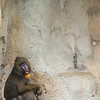 IMG_7498 - Female Mandrill Baboon