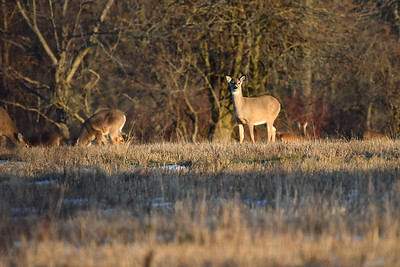 Deer 3 and more.