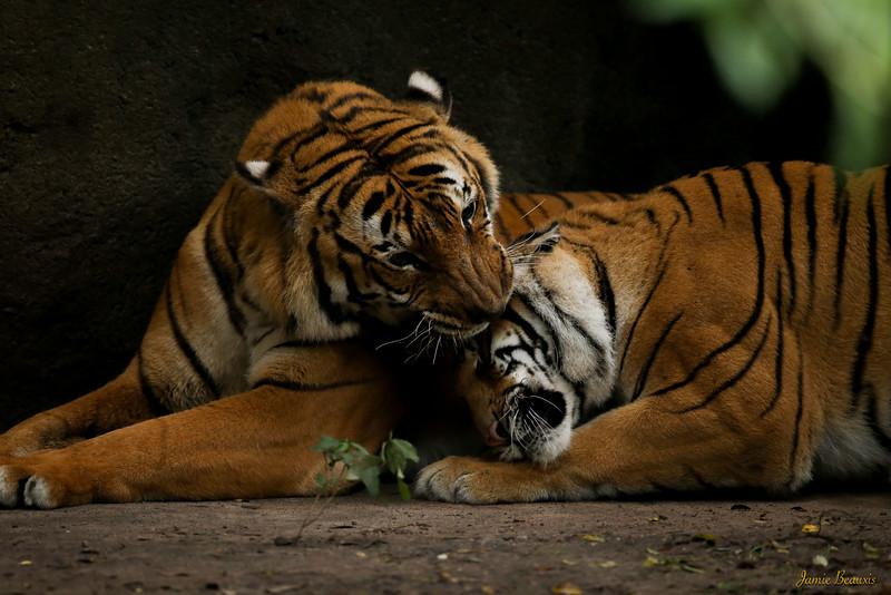 FB Zoo (8 of 29)