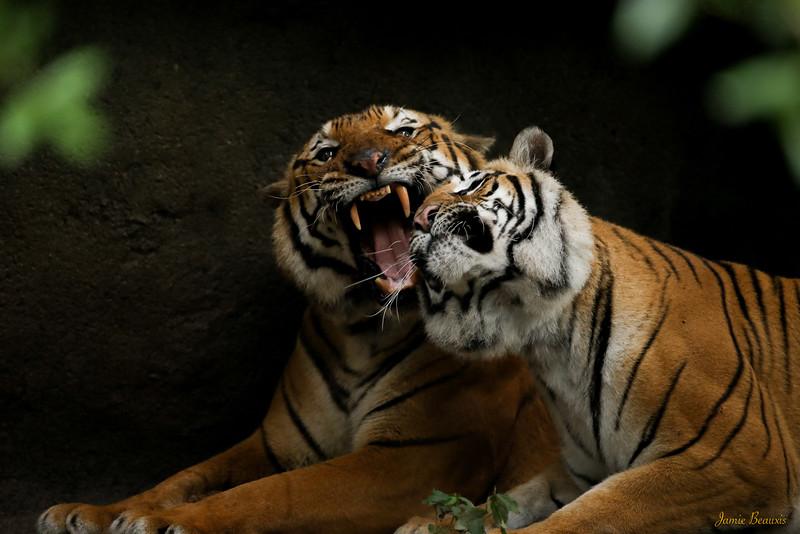 FB Zoo (10 of 29)