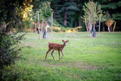 Deer Friends 8 23 16