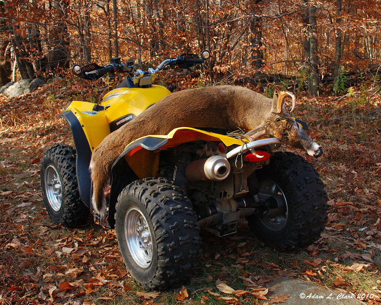 10-31-2010<br /> 150 lbs 8 pts<br /> Even a sport ATV can retrieve a deer