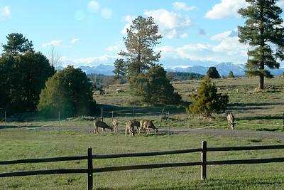Deer in Pagosa
