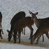 Deer 2014