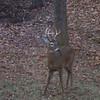 Buck in the back yard!