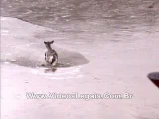Www.VideosLegais.Com.Br