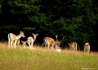 Deer 023