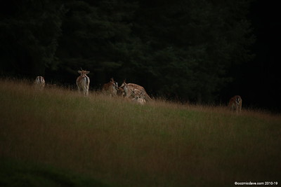 Deer 024