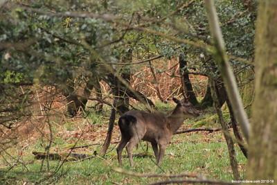 Deer 031