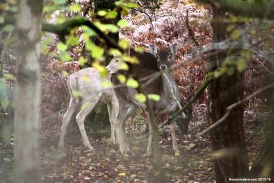 Deer 027