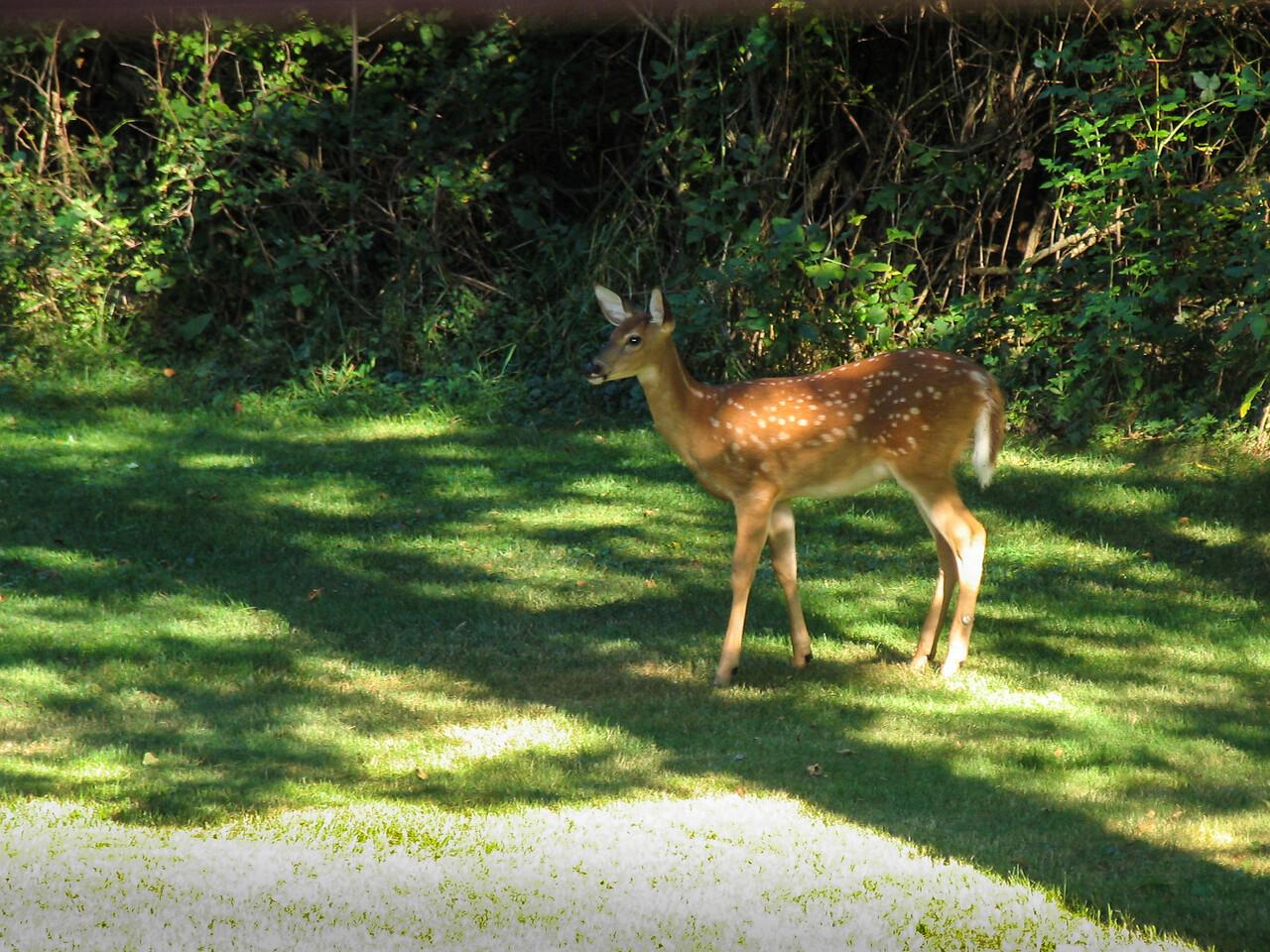 Backyard visitor - September 2005
