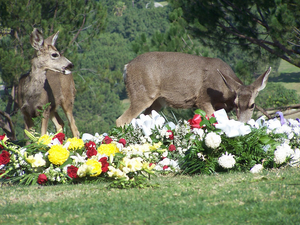 Deer Buffet 1