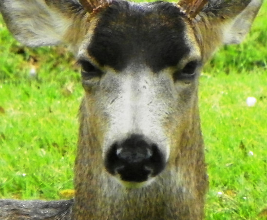 Deer 19