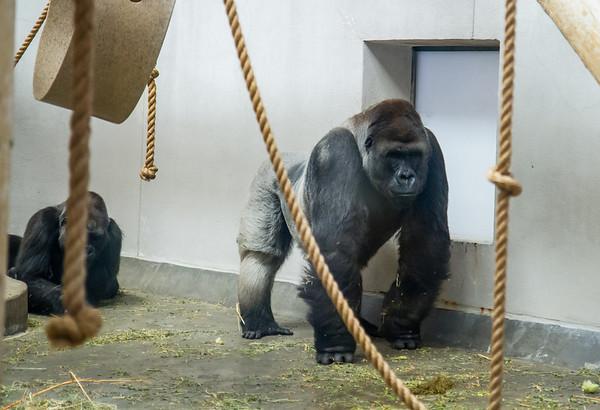 Denver Zoo 03-02-2013
