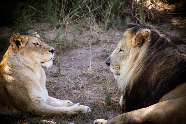 Denver Zoo 09-05-2012