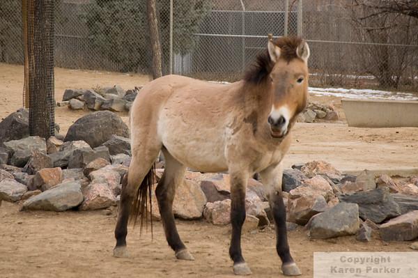 Denver Zoo - February, 2009