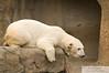 _DSC0039 - Polar Bear