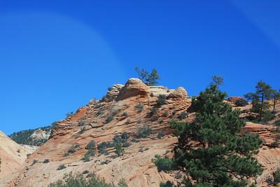 Desert Big Horns Zion National Park