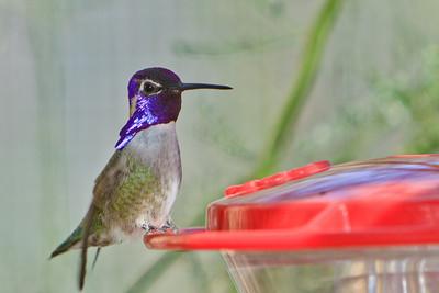 #35 Humming Bird