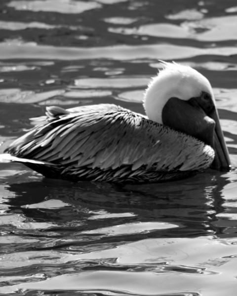 Bird 127 BW