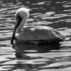 Bird 144 BW