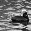 Bird 125 BW