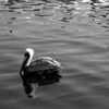 Bird 104 BW