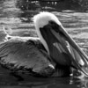 Bird 128 BW3