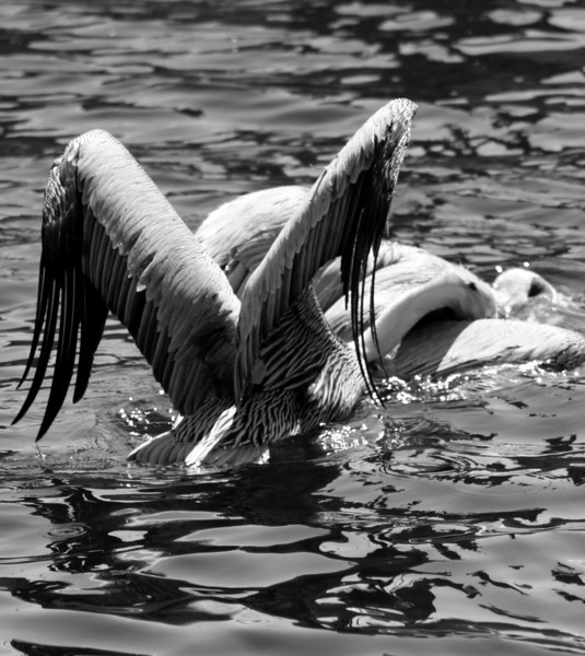 Bird 139 BW