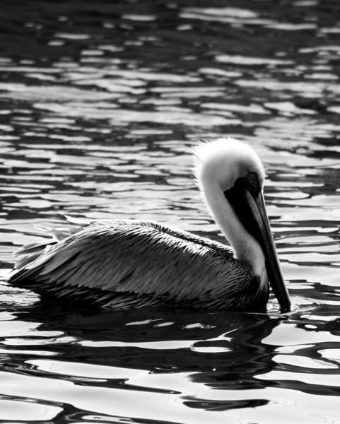 Bird 143 BW