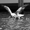Bird 132 BW
