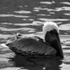 Bird 126 BW