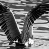 Bird 122 BW