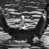 Bird 121 BW