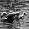 Bird 138 BW