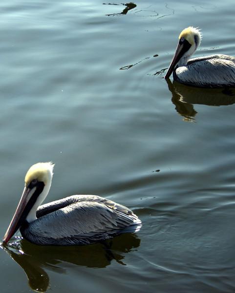 Bird 109