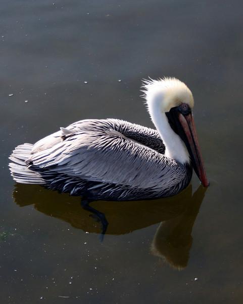 Bird 106