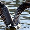 Bird 122