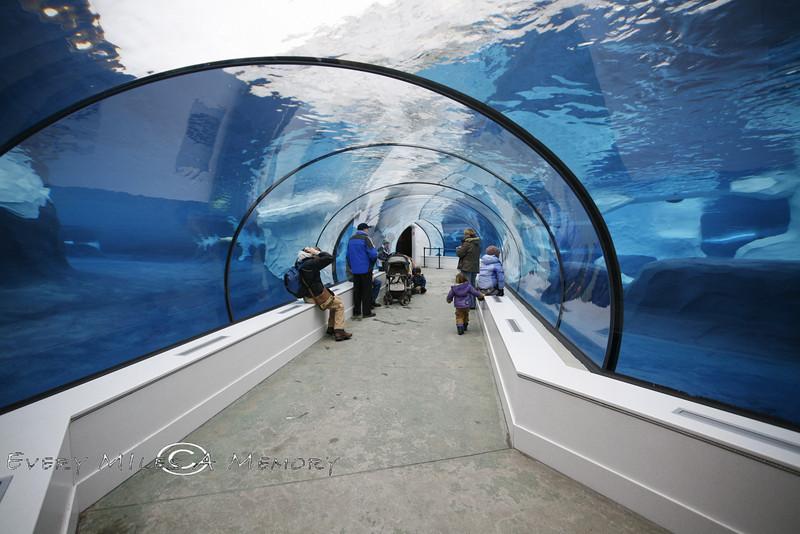 Looking down the Tube @ The Detroit Zoo Polar Bear Exhibit