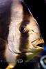 Close Up of a Tropical Fish in the Aquarium - Detroit Zoo