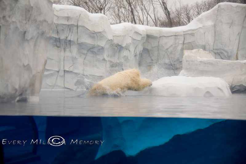 View of both the Top & The Bottom - Polar Bear Exhibit Detroit Zoo