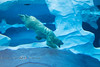 Underwater Acrobats - Polar Bears @ The Detroit Zoo