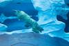 Underwater Acrobats - Polar Bears @ The Detroit Zoo