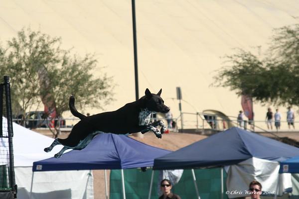 Dog Agility event, Scottsdale, AZ 2008