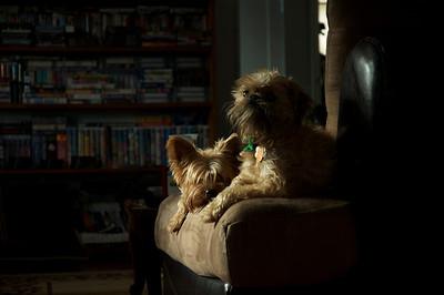 dogs, animals, sunlight, artsy, January 28,