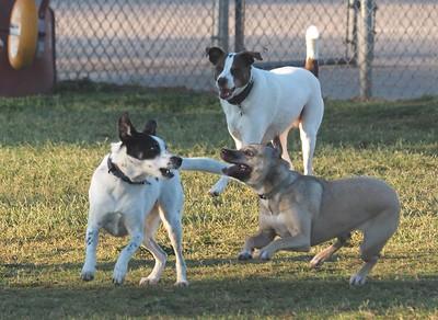 Dog Park 10-11-15