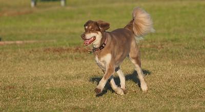 Dog Park 10-2-16