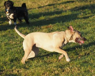 Dog Park 10-25-15
