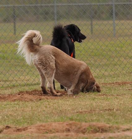 Dog Park 11-14-15